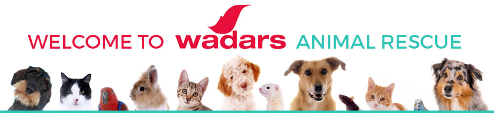 welcome to wadars animal rescue