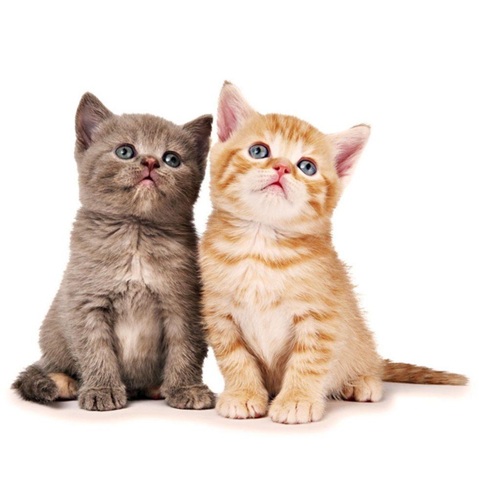 Cat Rescue Vounteering