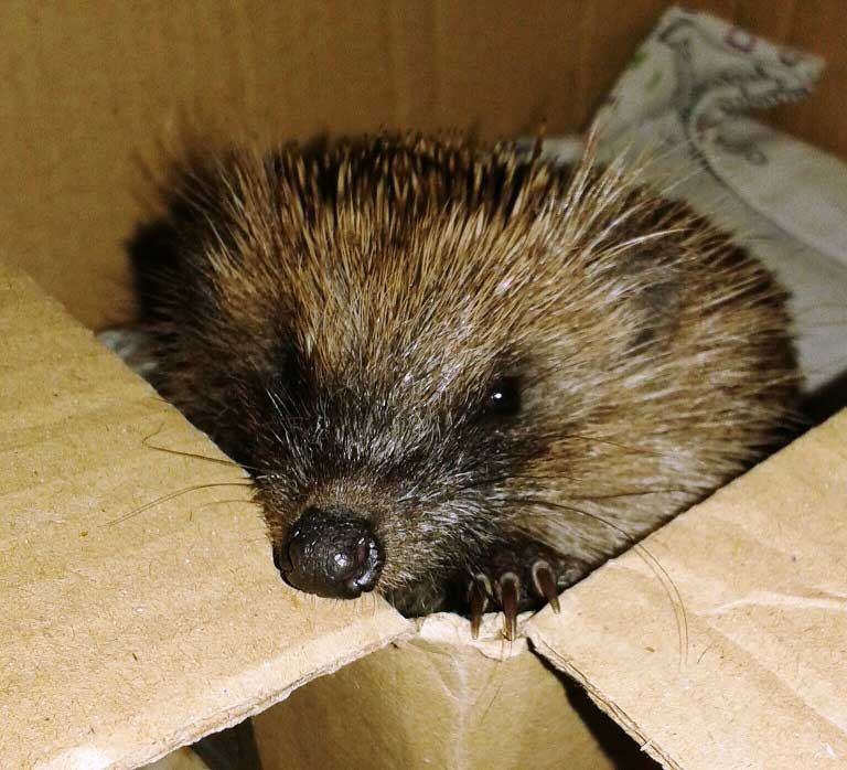 Hog-coming-out-of-a-box-(Paula-pic)